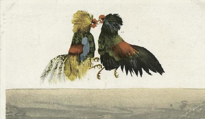 cockfighting.35